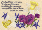 Lilies of the field (Mt. 6:29)