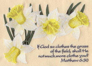 Lilies of the field (Mt. 6:30)