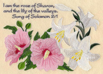 I am the rose of Sharon